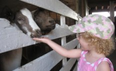 Maddie has always had a tenderness and love of animals!